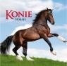 Kalendarz 2021 Konie