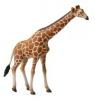 Żyrafa siatkowana (004-88534)
