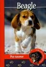 Pika przedstawia. Beagle. Psy rasowe