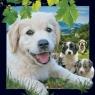 Pocztówka 3D Pies