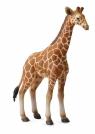 Żyrafa siatkowana młoda L (004-88535)