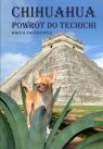Chihuahua powrót do techichi Paszkiewicz Marta