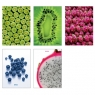 Brulion Herlitz World Of Fruits A5 krata 96 (9561358)
