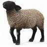 Owca suffolk M
