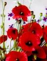 Torba TG-30 A4 /kwiaty,grafika /MIX  33x26