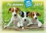 Kalendarz 2019 Rodzinny Psy domowe WL8