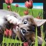 Pocztówka 3D Kot