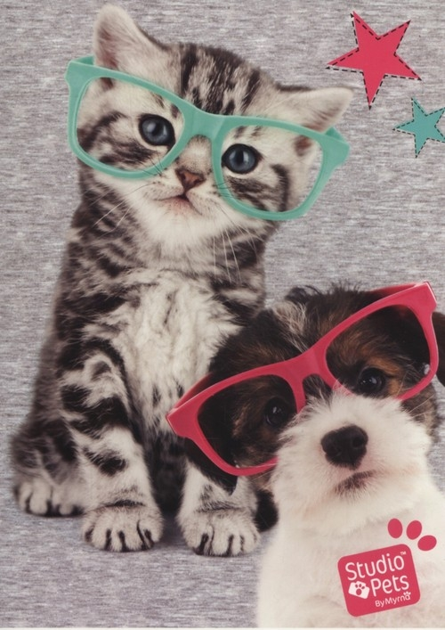 Zeszyt A5 Studio Pets w trzy linie 16 kartek Kot i pies