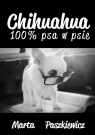 Chihuahua 100% psa w psie Paszkiewicz Marta