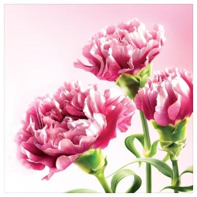 Karnet kwiatowy FF64