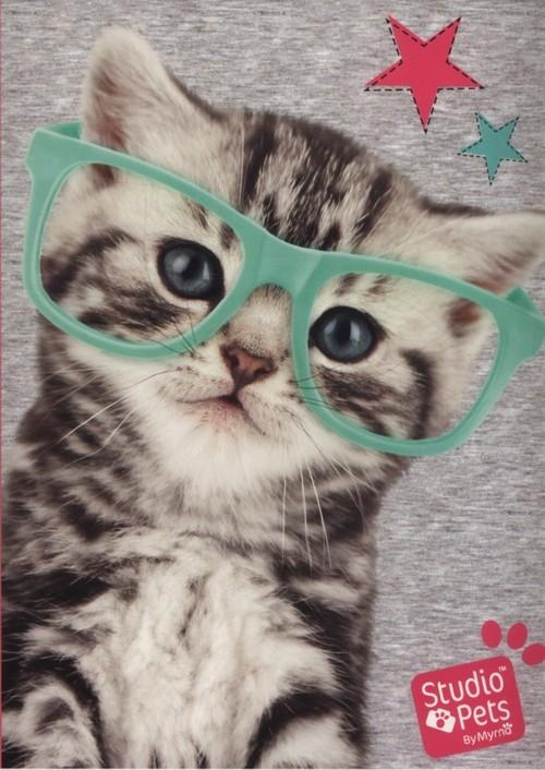 Zeszyt A5 Studio Pets w trzy linie 16 kartek Kot