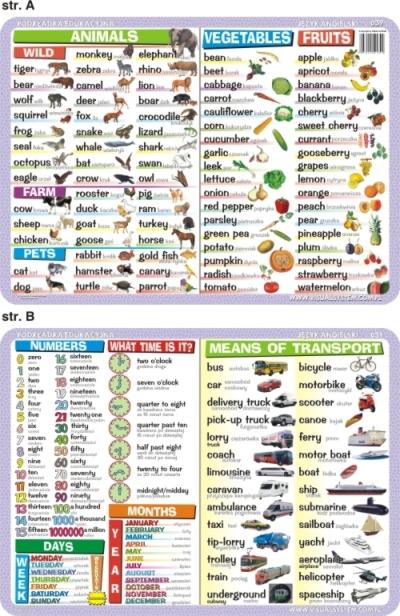Podkładka edukacyjna Język Angielski. Animals, Vegetables, Fruits, Numbers, Means of Transport