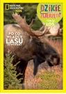 Dzikie Zwierzęta. 24 Łoś