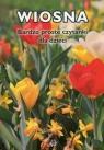 Wiosna Bardzo proste czytanki dla dzieci