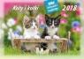 Kalendarz rodzinny 2018 - Koty i kotki WL9