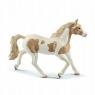 Klacz rasy Paint Horse Mare (13884)