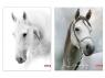 Teczka z gumką A4 UV Tray 1055 Horses