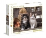 Puzzle 1000: Lovely Kittens (39340)