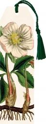 Zakładka 40 ze wstążką Kwiat