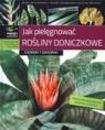 Jak pielęgnować rośliny doniczkowe Choroby i szkodniki
