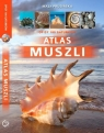 Atlas muszli Prusińska Maja