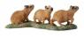 Kapibara młode