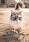 Kalendarz ścienny 2018 Koty i kociaki