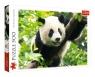 Puzzle 500: Panda (37142)