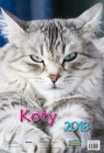 Kalendarz ścienny 2018 Koty