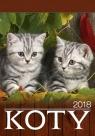 Kalendarz 2018 Wieloplanszowy Koty