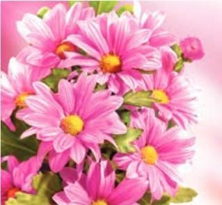 Karnet kwiatowy KW FF94 ZO05