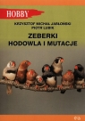 Zeberki Hodowla i mutacje Jabłoński Krzysztof Michał, Lubik Piotr