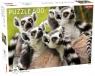 Puzzle 500: Lemurs