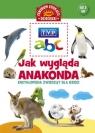 Jak wygląda anakonda? Encyklopedia zwierząt dla dzieci