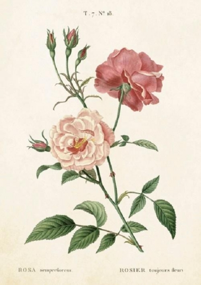 Karnet ST244 B6 + koperta Róża