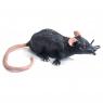 KC Rozciągliwy Szczur