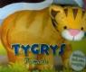 Tygrys Tomcio