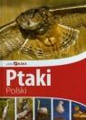 Piękna Polska Ptaki Polski Przybyłowicz Anna, Przybyłowicz Łukasz