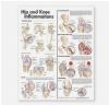 Hip and Knee Inflammations Anatomical Chart Anatomical Chart Company
