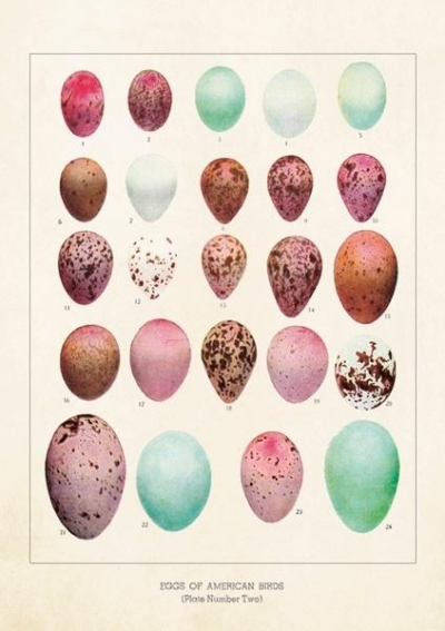 Karnet ST245 B6 + koperta Jajka ptaków