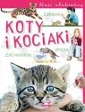 Nasi ulubieńcy Koty i kociaki Czapczyk P