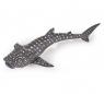 Rekin wielorybi młody