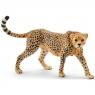 Samica geparda - 14746