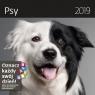 Kalendarz wieloplanszowy Psy 30x30 2019