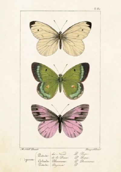 Karnet ST247 B6 + koperta Motyle