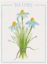 Karnet B6 Kwiaty akwarela. Stokrotka
