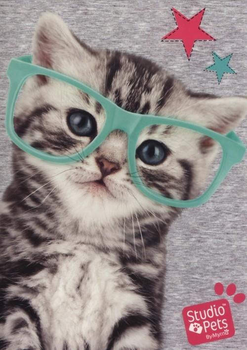 Zeszyt A5 Studio Pets w kratkę 16 kartek Kot
