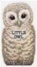 Little Owl L. Rigo