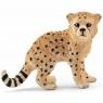 Młody gepard - 14747