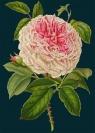 Karnet B6 z kopertą Róża